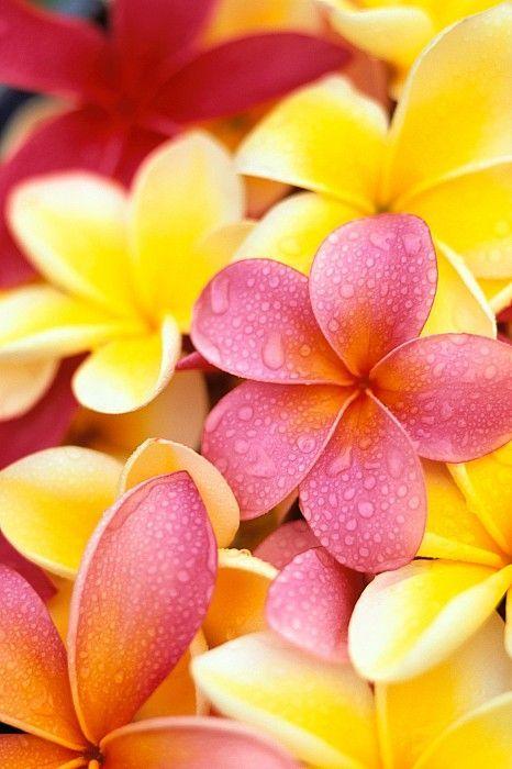 """El significado más profundo de ALOHA"" – por Curby Rule – – Cynthia Flores  Aloha-Mana b8c6acee908b"